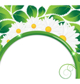 Daisies bouquet vector image