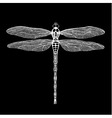 dragonfly white dragonfly on black background vector image vector image