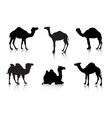 From a series Silhouettes Animals A camel vector image