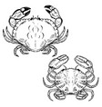 hand drawn crabs isolated on white background vector image vector image