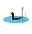 wild duck in pond with reeds vector image
