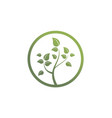 green tree organic environment logo vector image