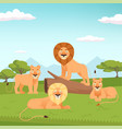 lion pride landscape wild fur animal hunters vector image