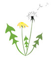 yellow and white dandelion vector image