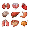 human internal organs cartoon brain and heart vector image
