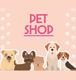pet shop cute dogs animals canine various breed vector image vector image