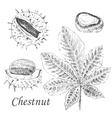 chestnut and leaf sketch set on white vector image vector image