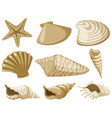 different types of seashells in brown color vector image