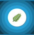isolated acacia leaf flat icon leaves vector image vector image