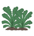 plants isolated vector image