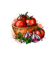 tomatoes and garlic from a splash of watercolor vector image