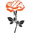 Beautiful rose vector image vector image