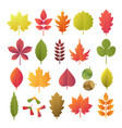 colorful autumn leaves set isolated on white vector image vector image