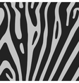 seamless background with zebra skin vector image vector image