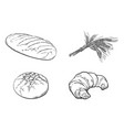 sketch white loaf bread croissant set vector image vector image