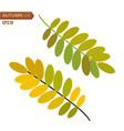 autumn leaf isolated on a white background vector image vector image