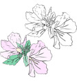 Beautiful flowers mallow stencil and color variant