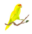 bird indian ringneck parrot in yellow on branch vector image vector image
