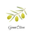 green olives branch logo label vector image vector image