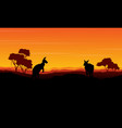 landscape kangaroo silhouette at the sunset vector image vector image