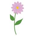 simple purple flower vector image