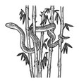 snake in bamboo thicket sketch vector image vector image
