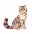 watercolor cute cat vector image vector image