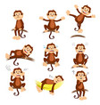 monkey with different expression vector image