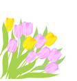 pink and yellow tulips vector image vector image