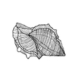 shell black outline on a white background vector image vector image