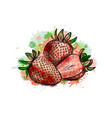 strawberry sweet fruit vector image