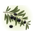 Black olives branch vector image
