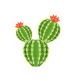 colorful cactus and succulent plant vector image vector image