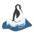 cute penguin on a piece of iceberg vector image vector image