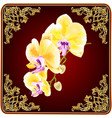orchid phalaenopsis with golden flowers tropical vector image