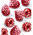raspberry watercolor juicy banner summer vector image vector image