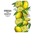 lemon border drawing citrus fruit frame vector image vector image