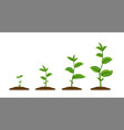 realistic sprouts green plant stages growth vector image