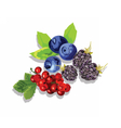 Blackberry blueberry and cranberry fruit set vector image vector image