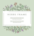 drawing botanical herbs text frame vector image vector image