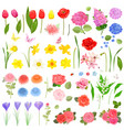 elegance collection of different beautiful fresh vector image vector image