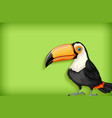 background template with plain color and toucan vector image vector image
