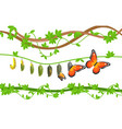 butterfly life cycle colorful flat vector image