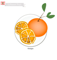 Fresh Orange A Famous Fruit in Lebanon vector image vector image