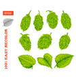 set of cones and leaves of hop plant isolated on vector image