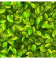Green leaves Seamless pattern EPS10 vector image