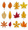 set autumn leaves isolated on white background vector image