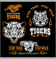 set of tiger themed sport logo vector image vector image