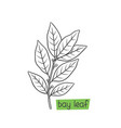 bay leaf hand drawn vector image vector image