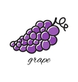 Doodle grape Hand-drawn object isolated on white vector image vector image